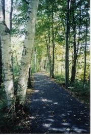 Mary V Flynn Trail - Sept birches